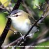 170607 How Much Birds Sing