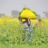 Why India doesn't need GM Mustard- A speech by Prof Rajinder Chaudhary (in Hindi)