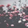 C R O W N L E S S kings | Prod. By Sean Kennedy| Single