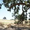 Mels Love Land Agoura Hills Oak Tree Blessings Grounding Sunday 2