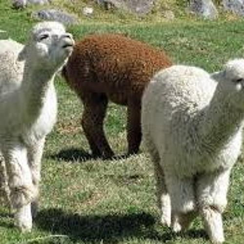 Clonación de alpacas