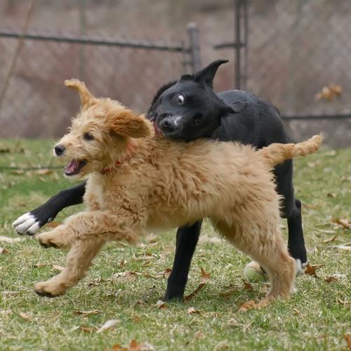 Dog to Dog Rough Play - Pt 2