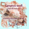 Carnation Smell (Karanfil Kokusu)(Instrumental Folk Ambient Soundtrack)