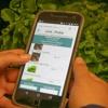 Agricultores oferecem alimentos orgânicos por meio de aplicativo de celular