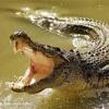 September Crocodiles