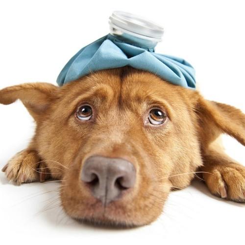 6 - 10 - 17  Dog Flu