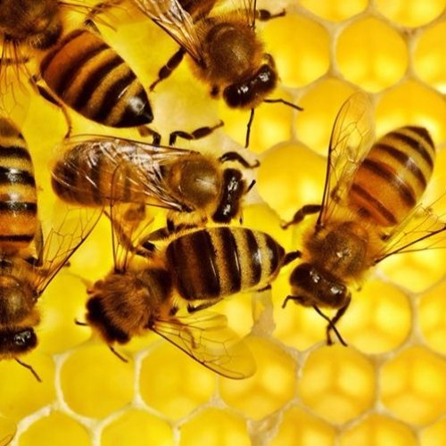 We Are The Bees