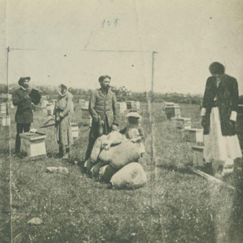 Beekeeping in Late Ottoman Palestine | Tamar Novick