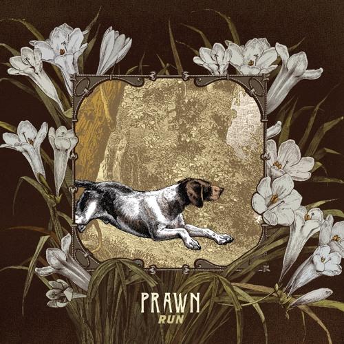 "Prawn - ""Greyhound"""