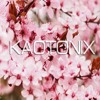 Kaotonix - Blossoms [Ant In The Cosmos] 900K Plays Thank You