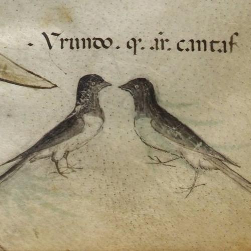 Birdsong in Europeana - a selection