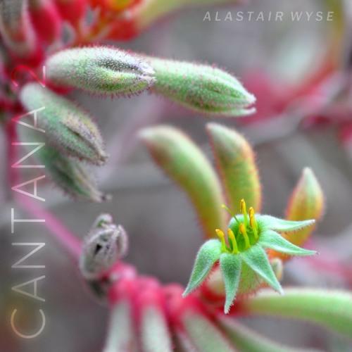 Cantana 2