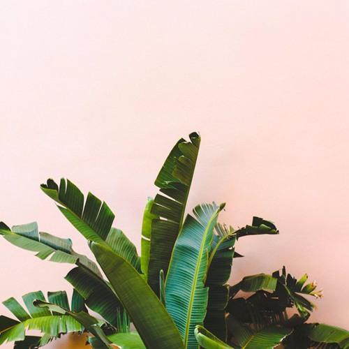 QECHUABOI - Sabor Digital - EP