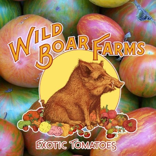Episode 61 Brad Gates Creator Of 60 New Tomato Varieties In 20 Years