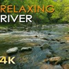 Relaxing River Water Stream - Birds singing - Forest Relaxing