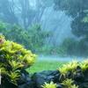 Sound Of Rain, Thunder & Bird Chirping - Meditation, Deep Sleep