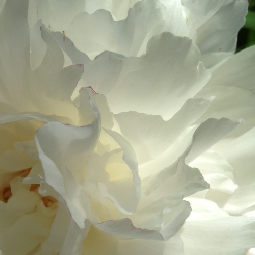 Goldberg Variations, 28 (Resilience)