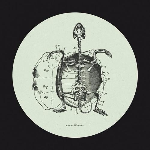 Hot Sea's Baby Turtle (Frivolous Remix)