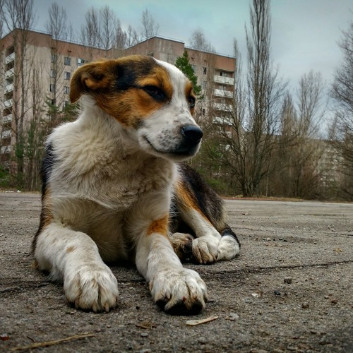 """Dogs Of Chernobyl"" by Rob Tyler"