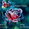 Lament For A Frozen flower cover - Michael Rizkalla