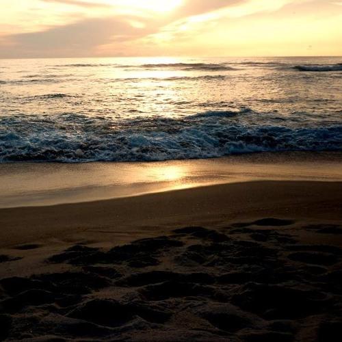 Zedmarlin - Ambientsound - Ocean