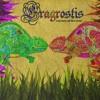 Eragrostis - Soaring Through The Forest