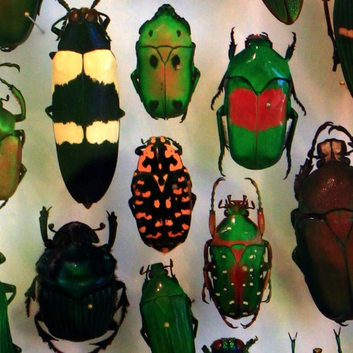 Episode 794 -  A Colorful Revolution Sparked by the Beetles