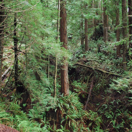 KHSU Thursday Night Talk - Forestry and Conservation Issues