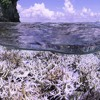 Chasing Coral, And Climate Solutions, In New Documentary