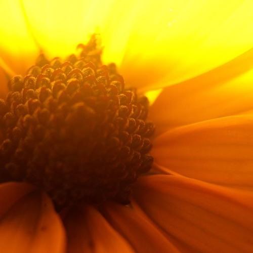 James Tristan Redding - Yellow Petals (7/17/17)