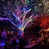 @ Nightwatch bar, Wildeburg 2017