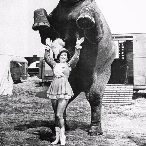 el elefante 1