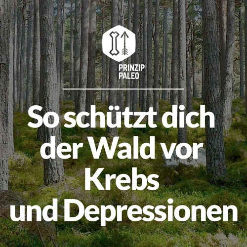 So schützt dich der Wald vor Krebs und Depressionen