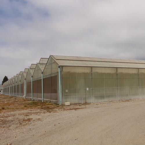 Smells like skunk... Carpinteria greenhouses turn to pot