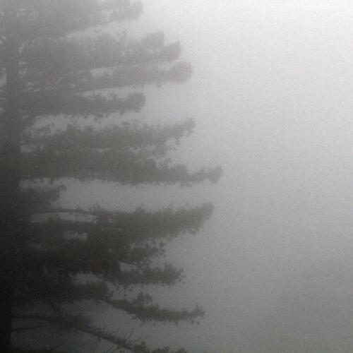 on the resonance of the fog
