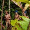 D3CODE - AMAZONIA