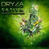 Oryza - Sativa (180)
