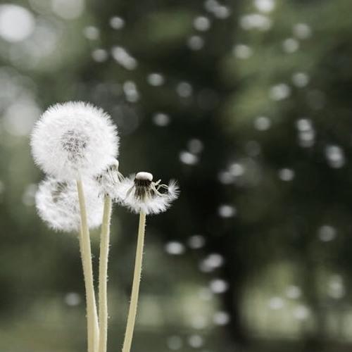 dandelions (short cover)