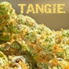 NickFlys420 Strain Review Episode 2 - Tangie