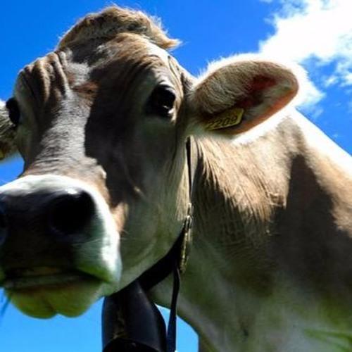 Fleischessen ohne schlechtes Gewissen - Neue Ideen von Start-ups