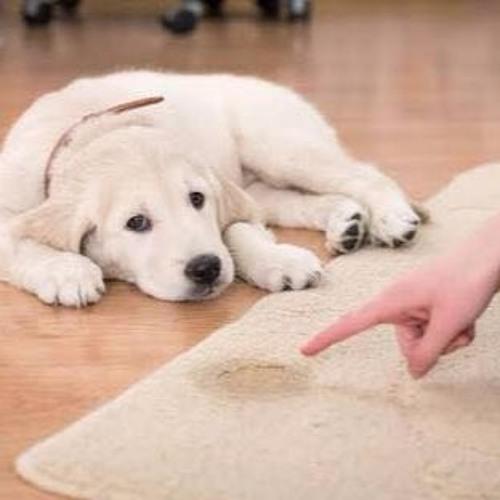 Perro nuevo en casa? Consejos para cuidar el agua