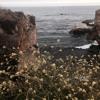 II. Seaside