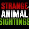 Episode 258 - 5 Strange Animal Sightings