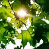 Kiko King - Autumn Leaves (Paolo Nutini Cover)