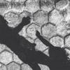Virus - Slank (cover)