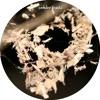 alm 114 - cendre ogata - de magia (extract)
