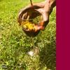 Dandelion Wine (prod. javi)
