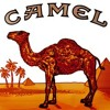 DVINE - CAMEL (Original mix)