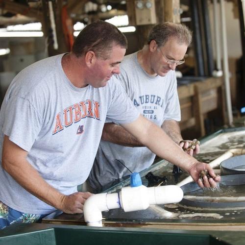 GulfCast Ep. 40 - Scott Rikard: Oysters in the Gulf