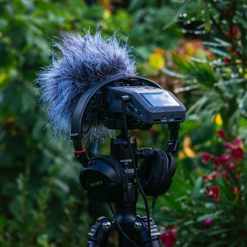 Sittard Gardens - Birds Singing